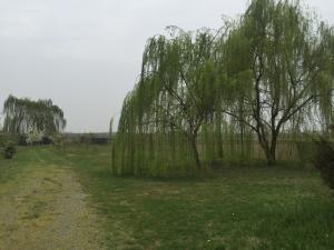 Terreno agricolo in vendita - 2000 mq