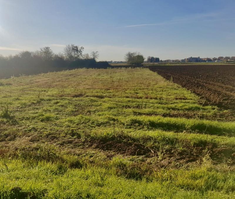 Vendita Terreno agricolo Terreno Cogliate Via A. Volta 249867